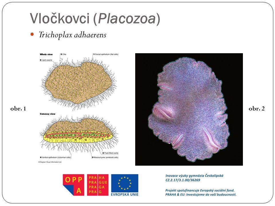 Vločkovci (Placozoa) Trichoplax adhaerens obr. 1obr. 2