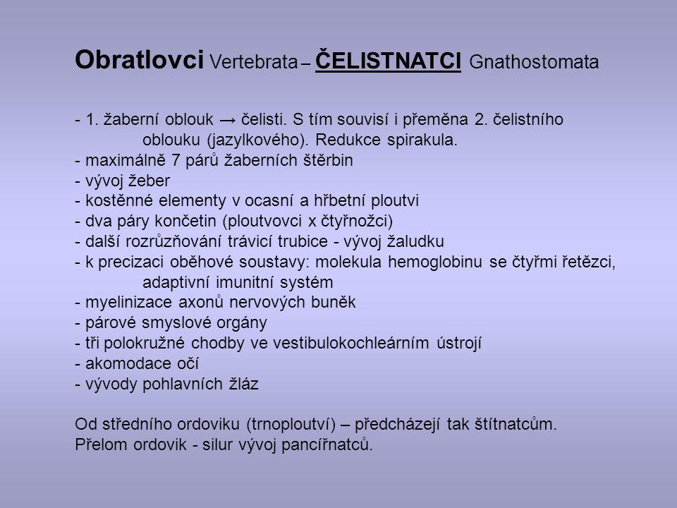 Obratlovci Vertebrata – ČELISTNATCI Gnathostomata - 1.