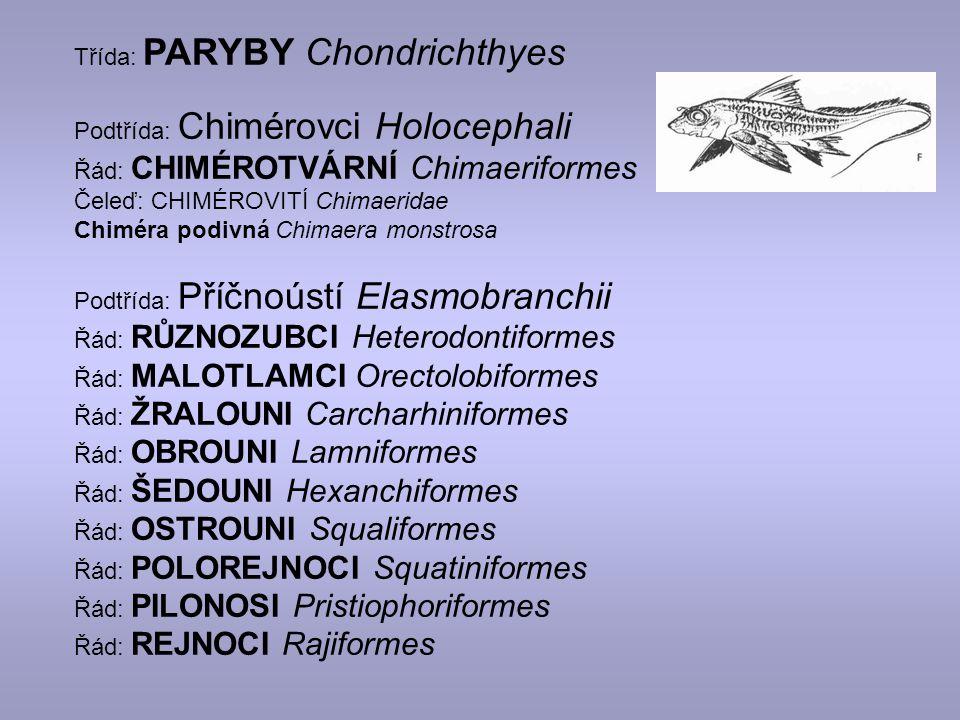 Třída: PARYBY Chondrichthyes Podtřída: Chimérovci Holocephali Řád: CHIMÉROTVÁRNÍ Chimaeriformes Čeleď: CHIMÉROVITÍ Chimaeridae Chiméra podivná Chimaera monstrosa Podtřída: Příčnoústí Elasmobranchii Řád: RŮZNOZUBCI Heterodontiformes Řád: MALOTLAMCI Orectolobiformes Řád: ŽRALOUNI Carcharhiniformes Řád: OBROUNI Lamniformes Řád: ŠEDOUNI Hexanchiformes Řád: OSTROUNI Squaliformes Řád: POLOREJNOCI Squatiniformes Řád: PILONOSI Pristiophoriformes Řád: REJNOCI Rajiformes