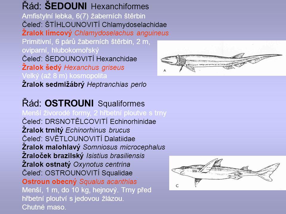 Řád: ŠEDOUNI Hexanchiformes Amfistylní lebka, 6(7) žaberních štěrbin Čeleď: ŠTÍHLOUNOVITÍ Chlamydoselachidae Žralok límcový Chlamydoselachus anguineus Primitivní, 6 párů žaberních štěrbin, 2 m, oviparní, hlubokomořský Čeleď: ŠEDOUNOVITÍ Hexanchidae Žralok šedý Hexanchus griseus Velký (až 8 m) kosmopolita Žralok sedmižábrý Heptranchias perlo Řád: OSTROUNI Squaliformes Menší živorodé formy, 2 hřbetní ploutve s trny Čeleď: DRSNOTĚLCOVITÍ Echinorhinidae Žralok trnitý Echinorhinus brucus Čeleď: SVĚTLOUNOVITÍ Dalatiidae Žralok malohlavý Somniosus microcephalus Žraloček brazilský Isistius brasiliensis Žralok ostnatý Oxynotus centrina Čeleď: OSTROUNOVITÍ Squalidae Ostroun obecný Squalus acanthias Menší, 1 m, do 10 kg, hejnový.
