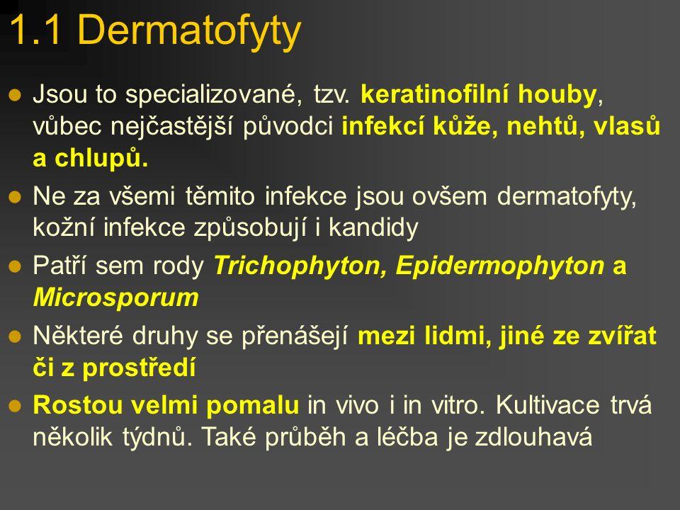 """1. Vláknité mikromycety V podstatě jde o synonymum toho, čemu se mezi lidmi říká """"plísně"""". www.medmicro.info"""