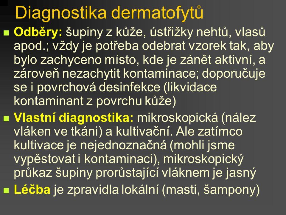 1.1 Dermatofyty Jsou to specializované, tzv. keratinofilní houby, vůbec nejčastější původci infekcí kůže, nehtů, vlasů a chlupů. Ne za všemi těmito in