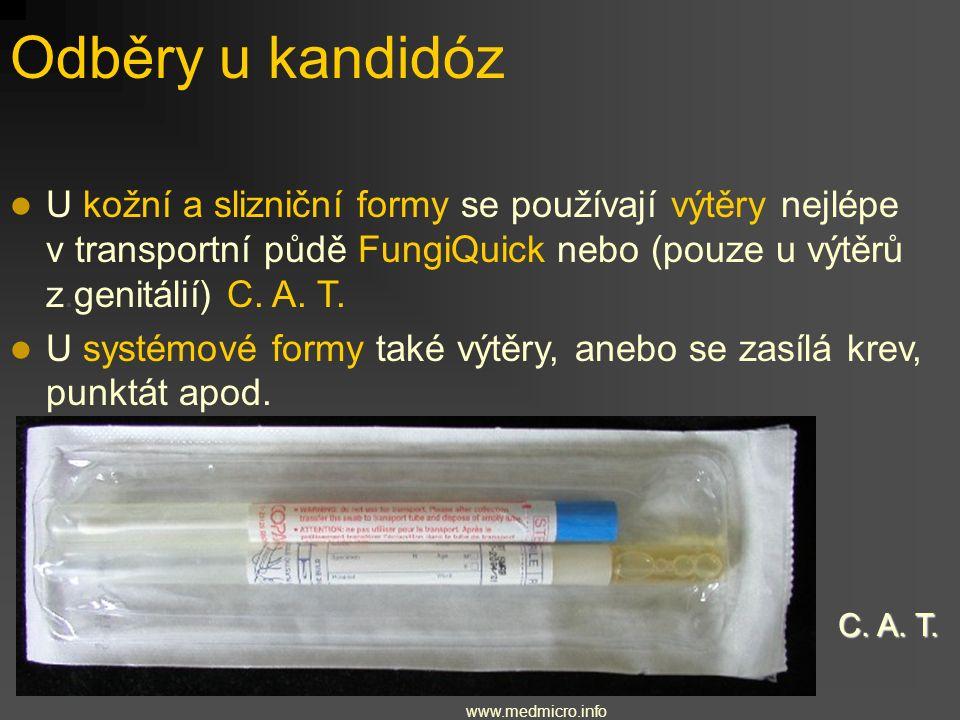 2.1. Rod Candida Nejběžnější houbový patogen Způsobuje lokální (kožní i slizniční) mykózy U oslabených způsobuje i systémové mykózy Častý výskyt ve st