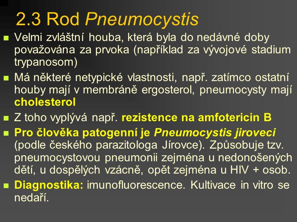 2.2 Rod Cryptococcus Tyto kvasinky lze nalézt v půdě a na různých substrátech alkalického charakteru. Častým rezervoárem je trus holubů Nedovedou vytv