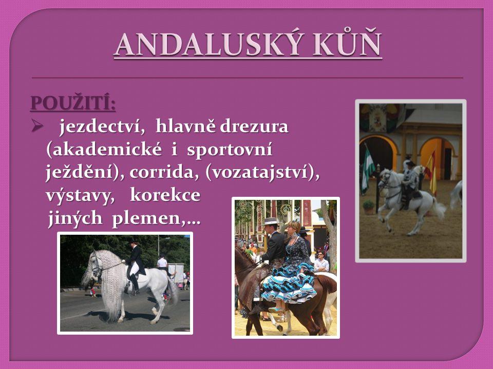 VZNIK : Portugalsko HISTORIE CHOVU:  varianta andaluského koně