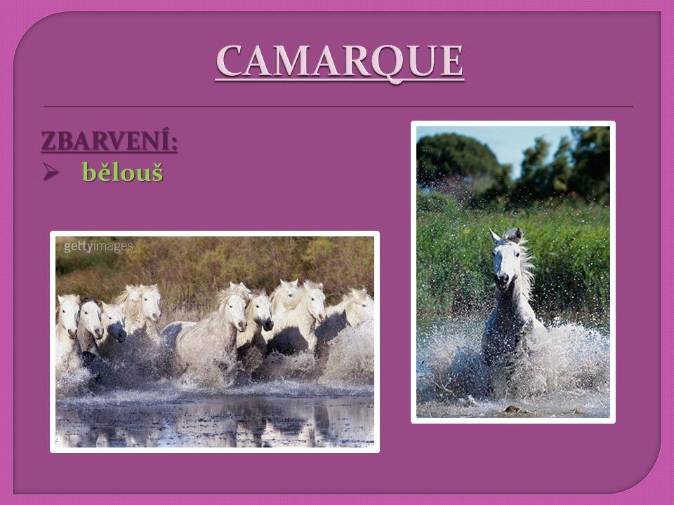 POUŽITÍ:  jízda koňmo, honácký kůň, corrida honácký kůň, corrida