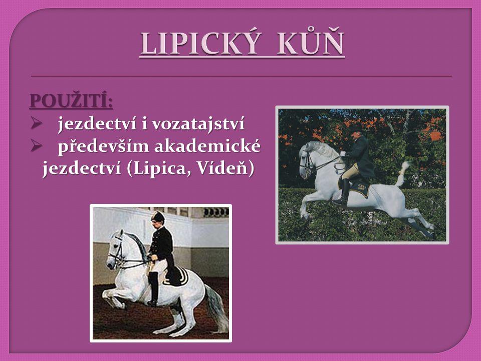 CHOVY:  Lipica (Slovinsko), Piber (Rakousko), Topoľčianky (Slovensko), Silvásvárad (Maďarsko) Silvásvárad (Maďarsko)