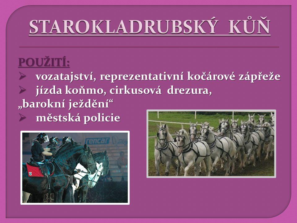 VZNIK : Rusko - hřebčín Chrenovoj - hřebčín Chrenovoj HISTORIE CHOVU:  hrabě A.