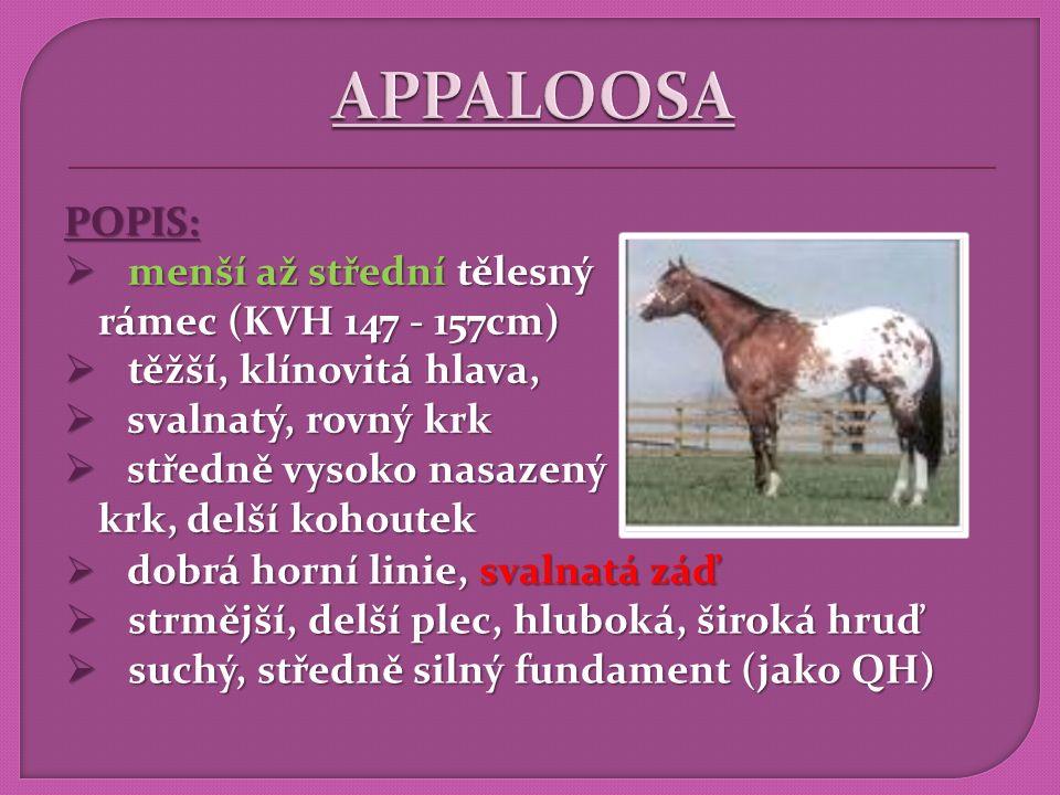 """ZBARVENÍ:  různé druhy parciálního albinismu  více na www.appaloosa.cz  barevné varianty (typy): 1) LEOPARD: – """"tygr, hermelín – """"tygr, hermelín – bílý, tmavé skvrny po těle po těle"""