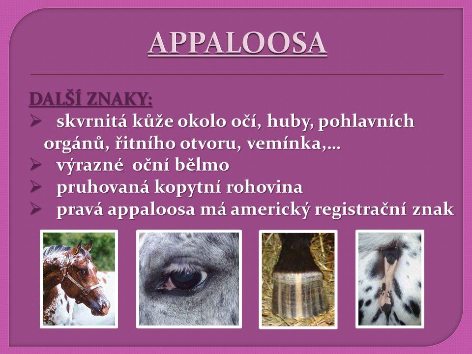VLASTNOSTI:  konstitučně tvrdý kůň, vytrvalý  jistá mechanika pohybu ve členitém terénu