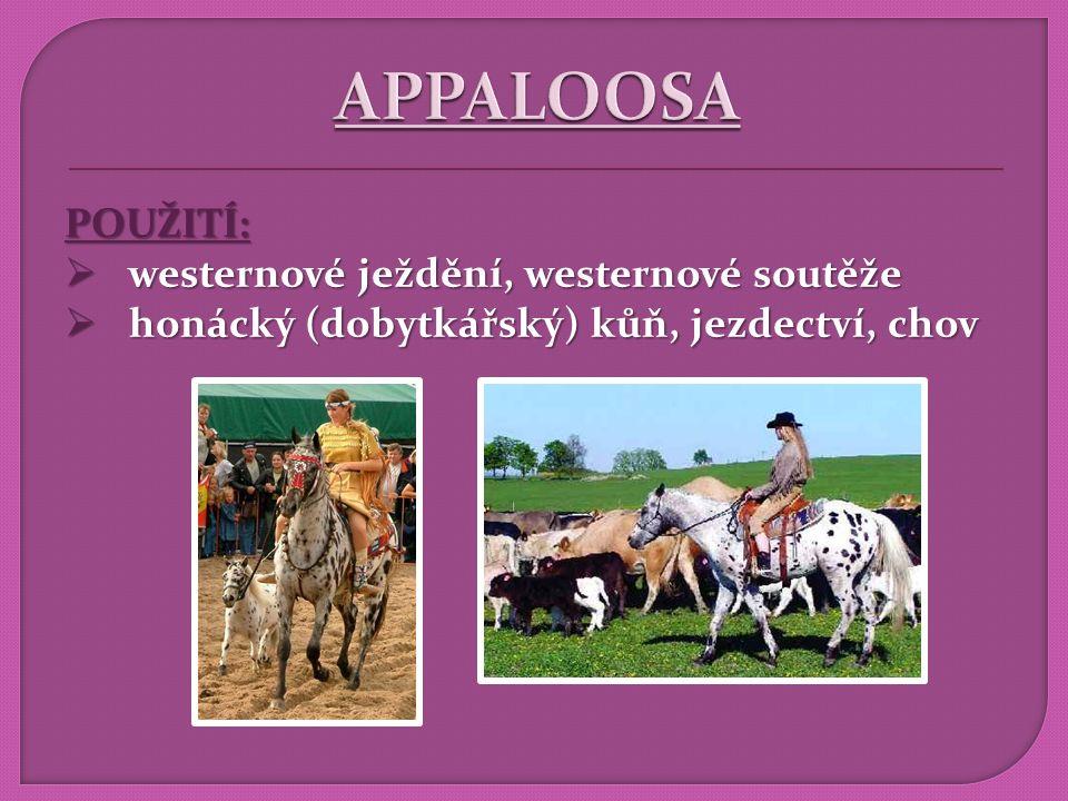 POUŽITÍ:  westernové ježdění, westernové soutěže  honácký (dobytkářský) kůň, jezdectví, chov