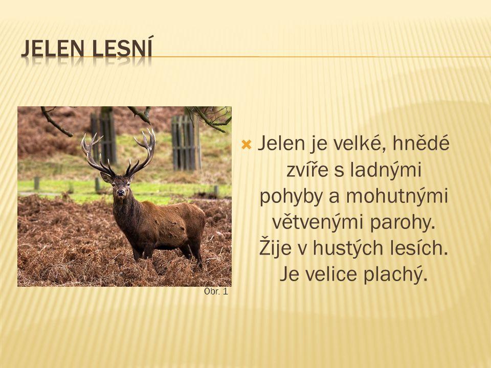  Jelen je velké, hnědé zvíře s ladnými pohyby a mohutnými větvenými parohy. Žije v hustých lesích. Je velice plachý. Obr. 1