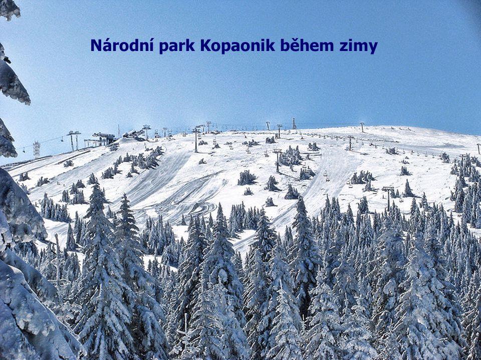 Národní park Kopaonik během zimy