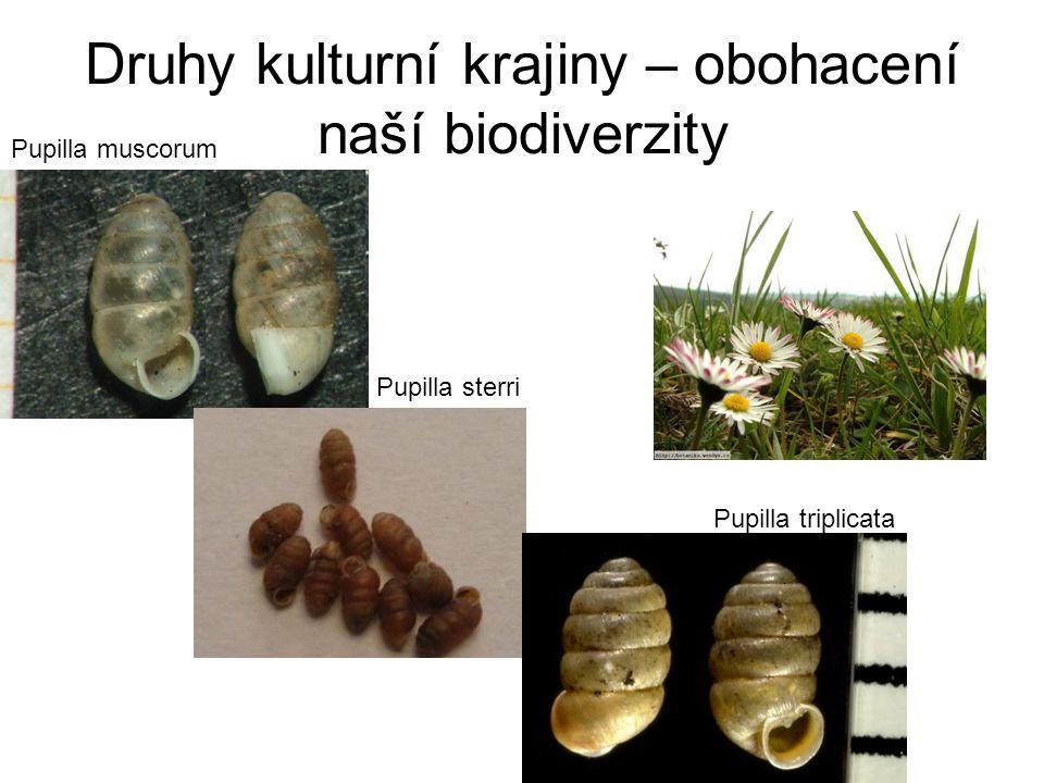 Druhy kulturní krajiny – obohacení naší biodiverzity Pupilla muscorum Pupilla sterri Pupilla triplicata