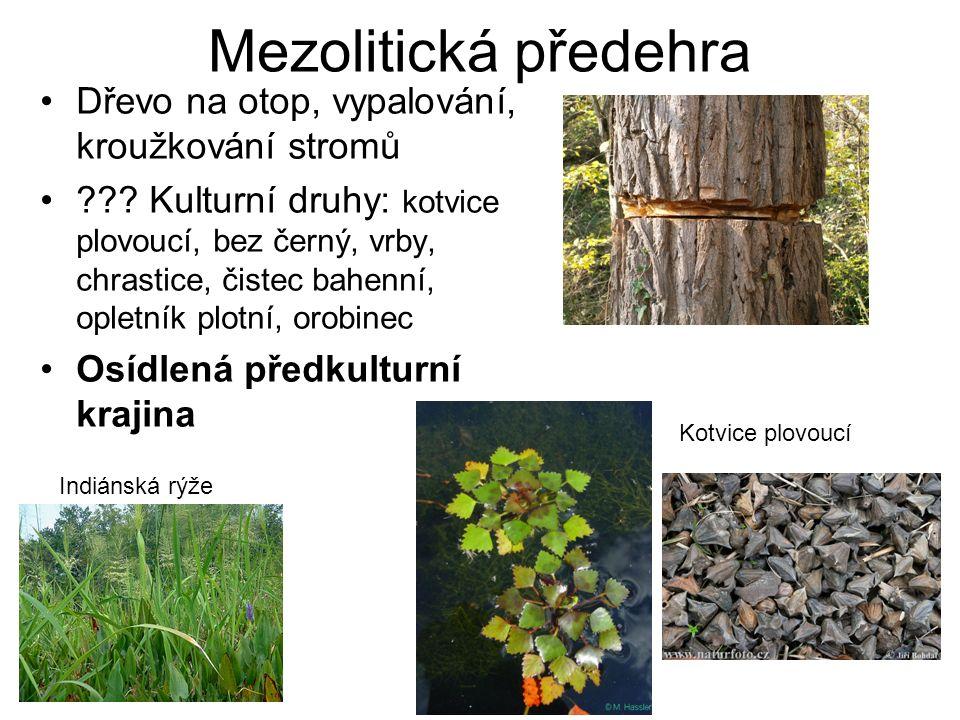 Mezolitická předehra Dřevo na otop, vypalování, kroužkování stromů ??.
