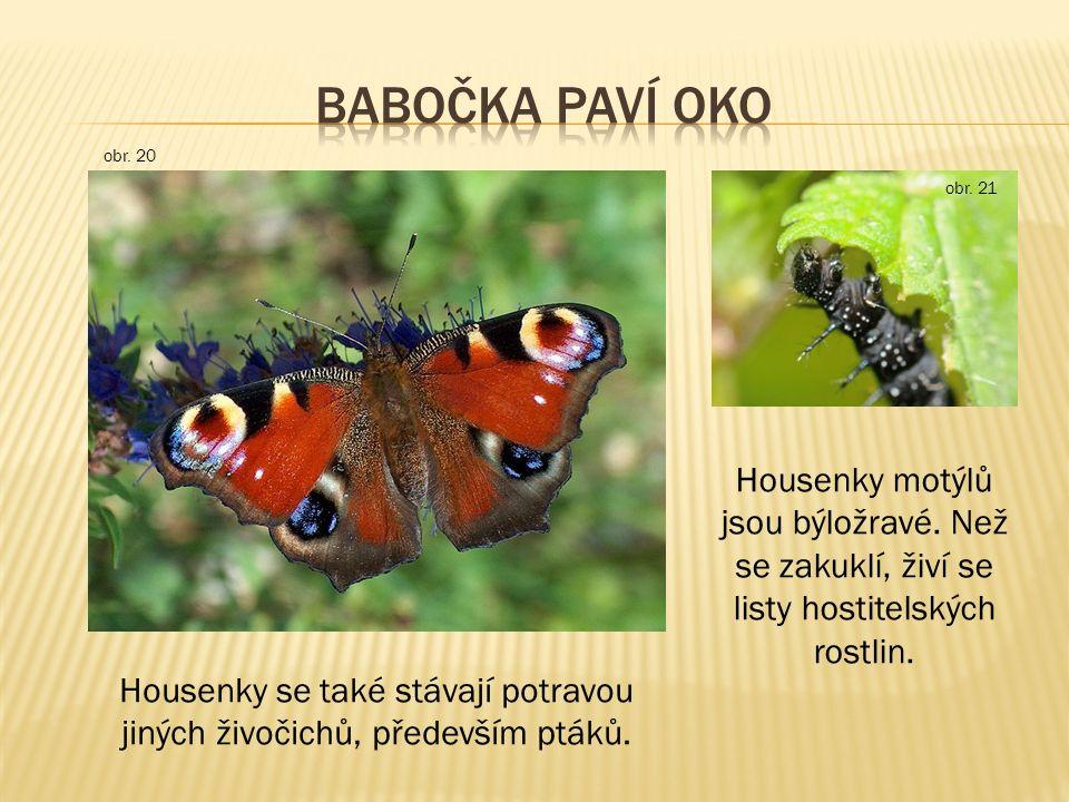 Housenky motýlů jsou býložravé.Než se zakuklí, živí se listy hostitelských rostlin.