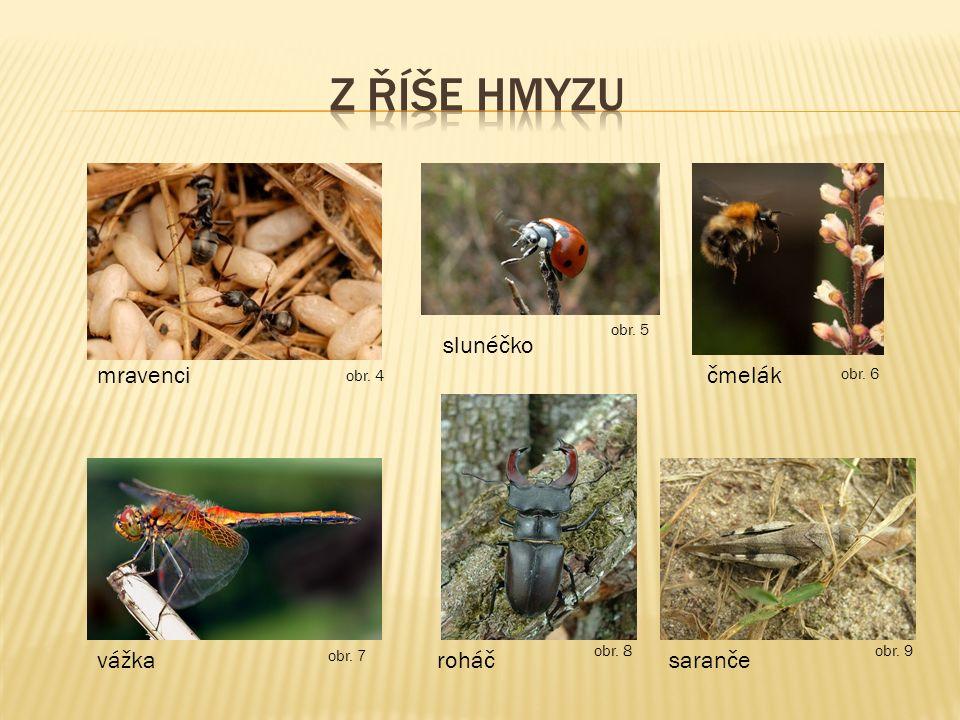 mravenci slunéčko čmelák vážkaroháčsaranče obr. 4 obr. 5 obr. 6 obr. 7 obr. 8 obr. 9
