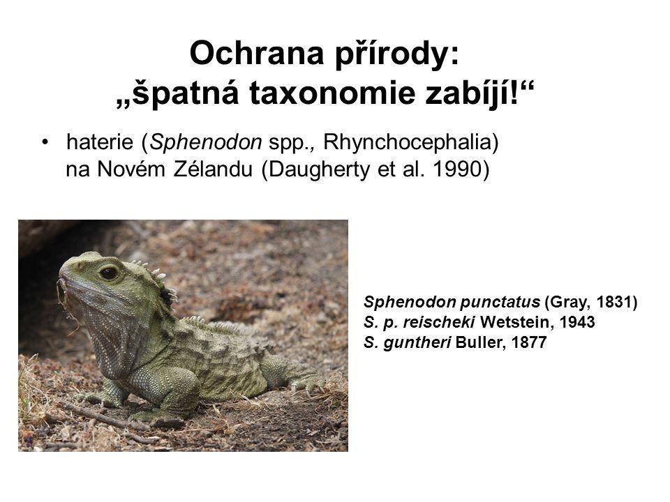 """Ochrana přírody: """"špatná taxonomie zabíjí!"""" haterie (Sphenodon spp., Rhynchocephalia) na Novém Zélandu (Daugherty et al. 1990) Sphenodon punctatus (Gr"""