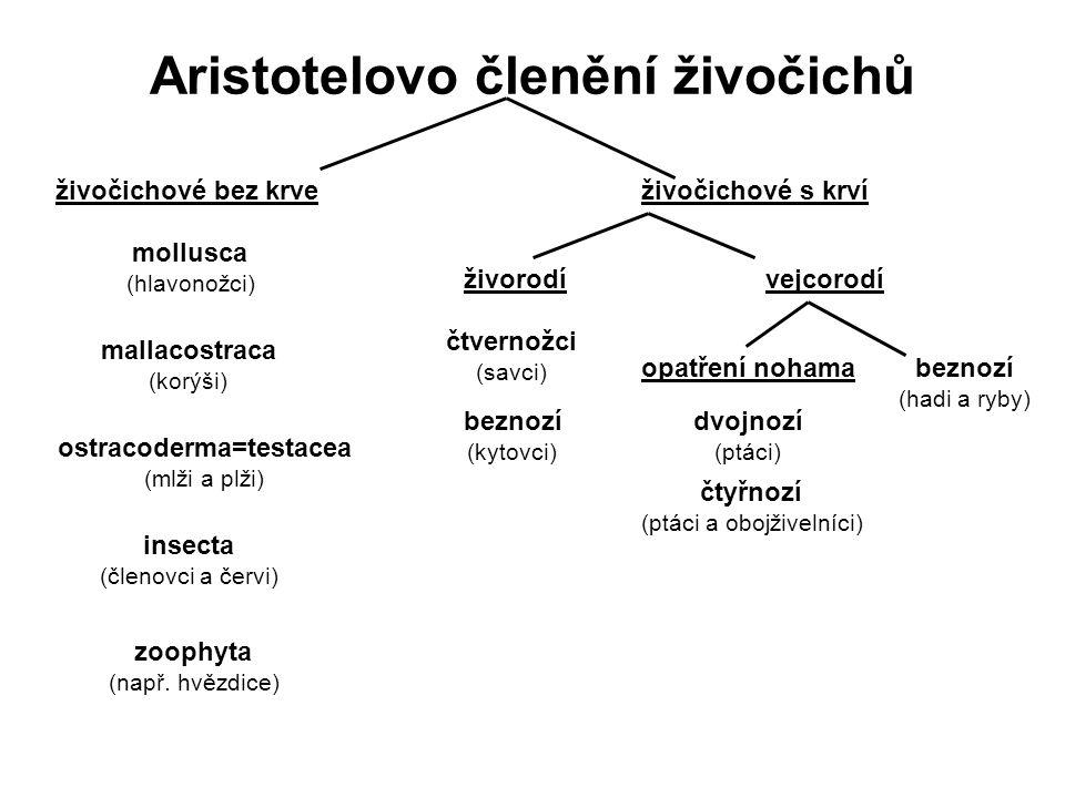 Aristotelovo členění živočichů živočichové bez krveživočichové s krví mollusca (hlavonožci) mallacostraca (korýši) ostracoderma=testacea (mlži a plži)