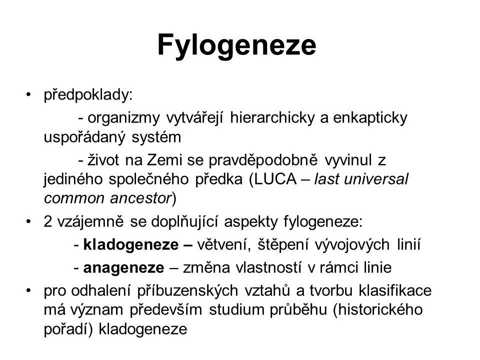 Fylogeneze předpoklady: - organizmy vytvářejí hierarchicky a enkapticky uspořádaný systém - život na Zemi se pravděpodobně vyvinul z jediného společné
