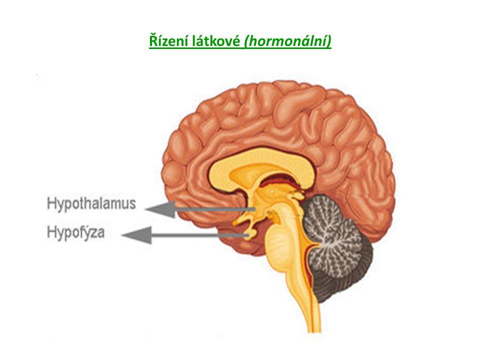 Řízení látkové (hormonální)