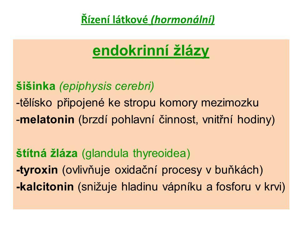 endokrinní žlázy šišinka (epiphysis cerebri) -tělísko připojené ke stropu komory mezimozku -melatonin (brzdí pohlavní činnost, vnitřní hodiny) štítná žláza (glandula thyreoidea) -tyroxin (ovlivňuje oxidační procesy v buňkách) -kalcitonin (snižuje hladinu vápníku a fosforu v krvi)