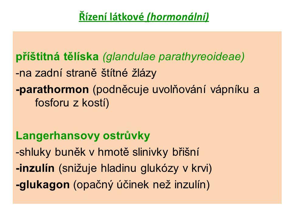 příštitná tělíska (glandulae parathyreoideae) -na zadní straně štítné žlázy -parathormon (podněcuje uvolňování vápníku a fosforu z kostí) Langerhansovy ostrůvky -shluky buněk v hmotě slinivky břišní -inzulín (snižuje hladinu glukózy v krvi) -glukagon (opačný účinek než inzulín)