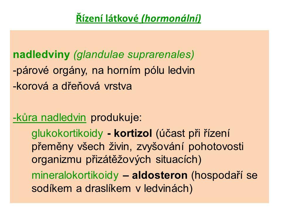 Řízení látkové (hormonální) nadledviny (glandulae suprarenales) -párové orgány, na horním pólu ledvin -korová a dřeňová vrstva -kůra nadledvin produkuje: glukokortikoidy - kortizol (účast při řízení přeměny všech živin, zvyšování pohotovosti organizmu přizátěžových situacích) mineralokortikoidy – aldosteron (hospodaří se sodíkem a draslíkem v ledvinách)