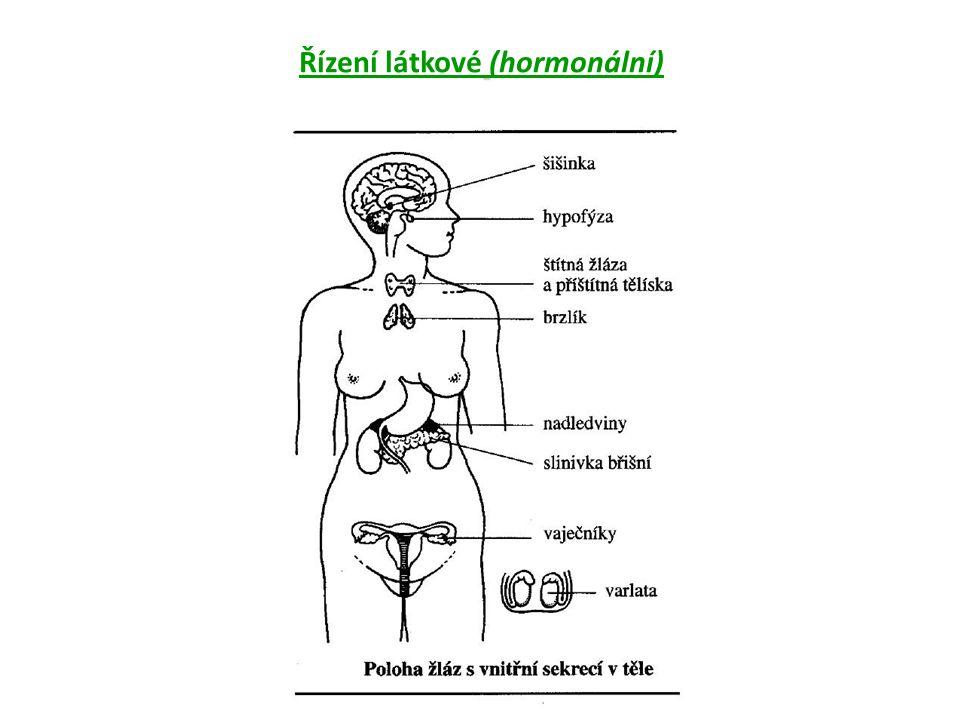 -hierarchický systém uspořádání komplex hypotalamohypofyzární -nejvýznamnější postavení -nejvyšší postavení mají neurosekreční buňky spodiny mezimozku (hypotalamu) -podvěsek mozkový = hypofýza -přední lalok hypofýzy = adenohypofýza -zadní lalok hypofýzy = neurohypofýza