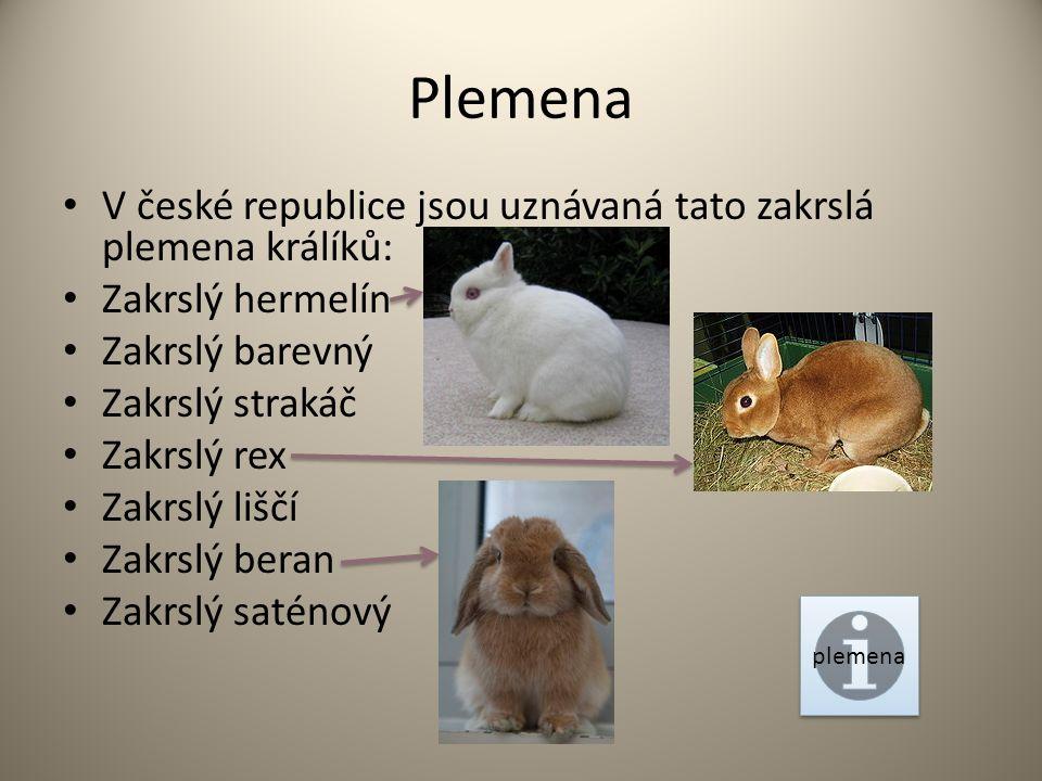 Plemena V české republice jsou uznávaná tato zakrslá plemena králíků: Zakrslý hermelín Zakrslý barevný Zakrslý strakáč Zakrslý rex Zakrslý liščí Zakrslý beran Zakrslý saténový plemena