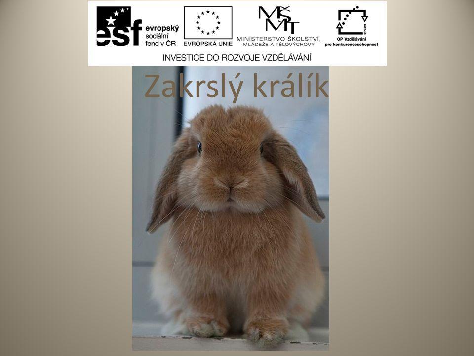 Pracovní list - řešení 1.Seno nesmí být zapařené a 2.Z ovoce má králík nejraději jablka a 3.Končetiny jsou svalnaté s 4.Na dno klece dáváme rohož nebo 5.Mláďata se rodí holá a 6.Domovem pro králíčka je jeho Zajíček v pohádce budka se jmenuje.