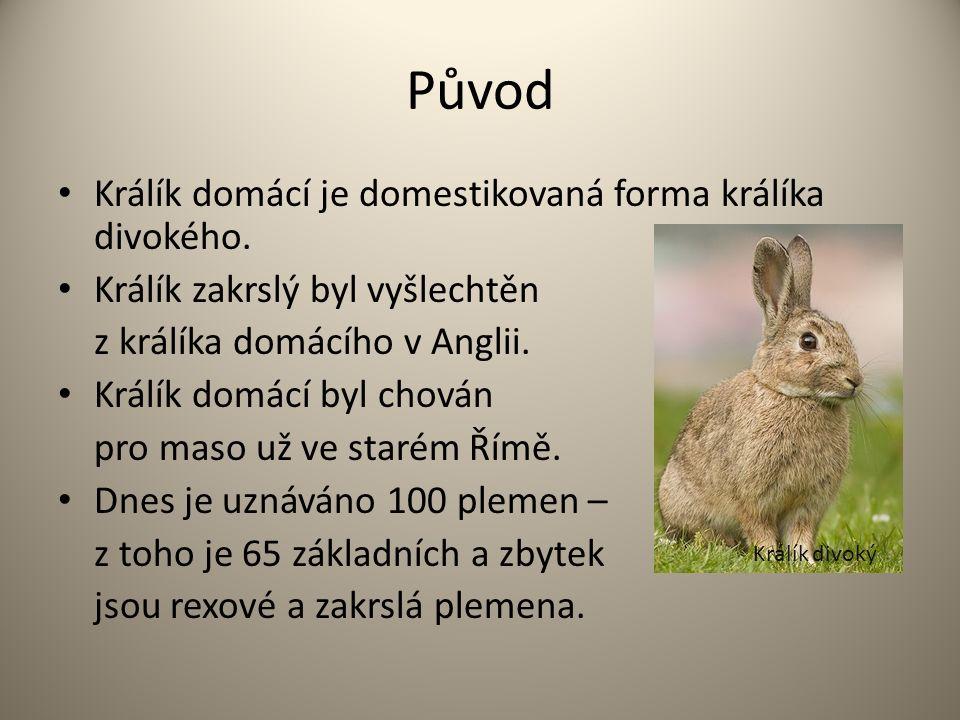Původ Králík domácí je domestikovaná forma králíka divokého. Králík zakrslý byl vyšlechtěn z králíka domácího v Anglii. Králík domácí byl chován pro m