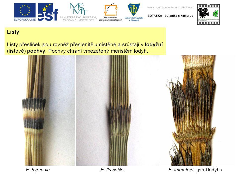 Listy Listy přesliček jsou rovněž přeslenitě umístěné a srůstají v lodyžní (listové) pochvy. Pochvy chrání vmezeřený meristém lodyh. E. hyemaleE. fluv