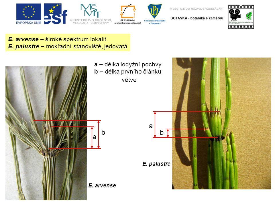 E. arvense – široké spektrum lokalit E. palustre – mokřadní stanoviště, jedovatá a b a b a – délka lodyžní pochvy b – délka prvního článku větve E. ar