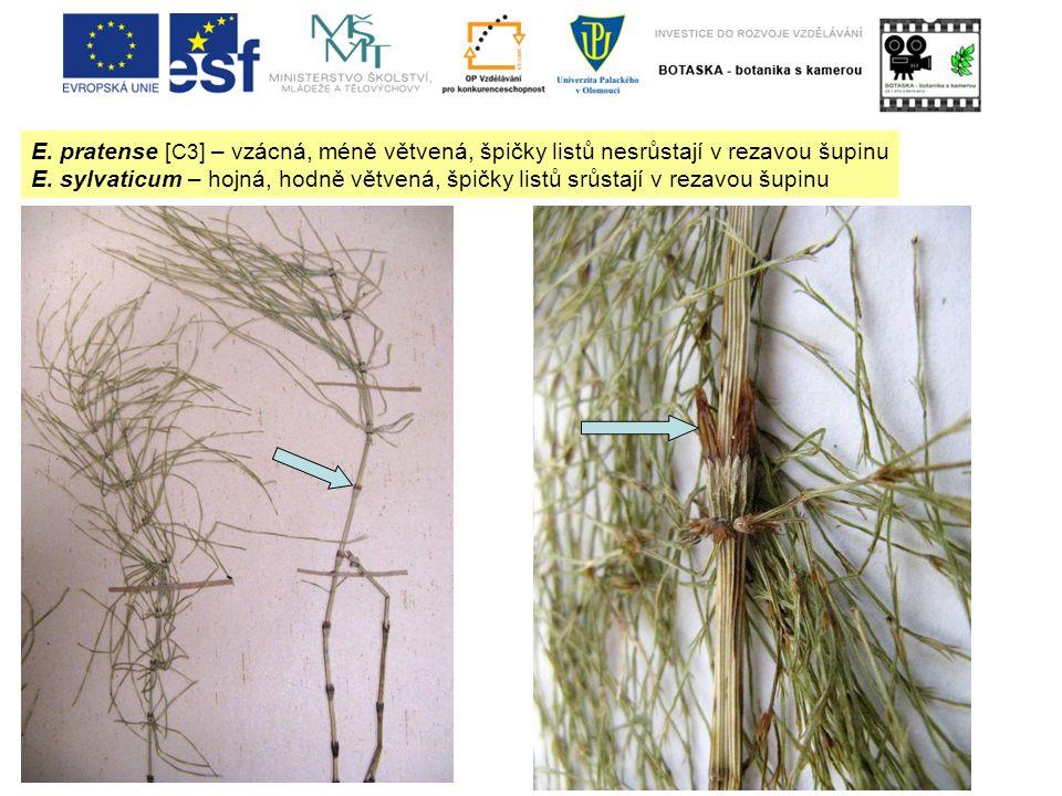 E. pratense [ C3 ] – vzácná, méně větvená, špičky listů nesrůstají v rezavou šupinu E. sylvaticum – hojná, hodně větvená, špičky listů srůstají v reza