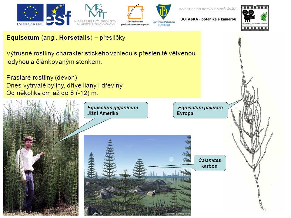 Equisetum (angl. Horsetails) – přesličky Výtrusné rostliny charakteristického vzhledu s přeslenitě větvenou lodyhou a článkovaným stonkem. Prastaré ro