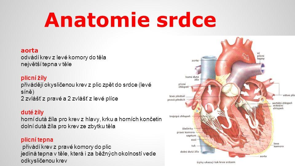 Anatomie srdce aorta odvádí krev z levé komory do těla největší tepna v těle plicní žíly přivádějí okysličenou krev z plic zpět do srdce (levé síně) 2
