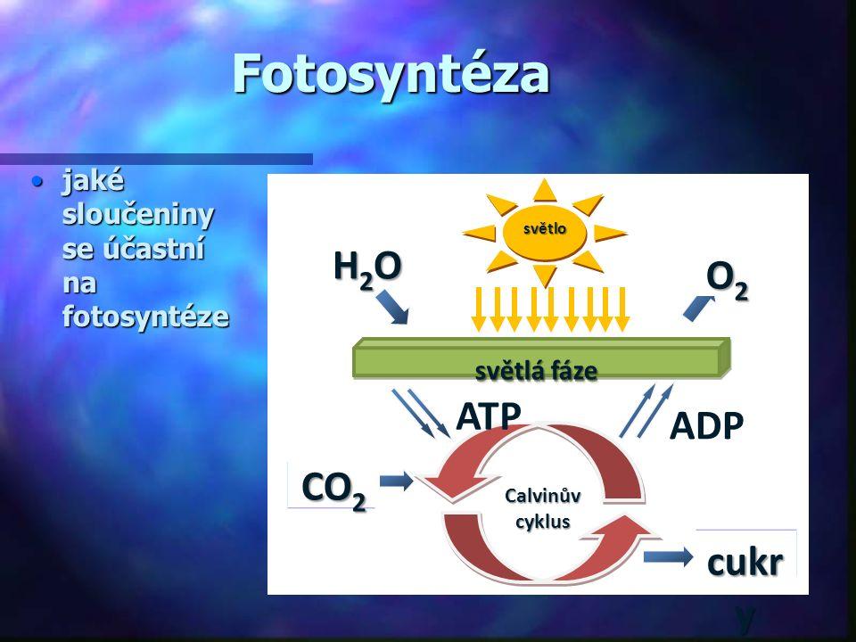 Fotosyntéza světlá fáze světlosvětlo Calvinův cyklus ATP ADP jaké sloučeniny se účastní na fotosyntézejaké sloučeniny se účastní na fotosyntéze H2OH2OH2OH2O O2O2O2O2 CO 2 cukr y