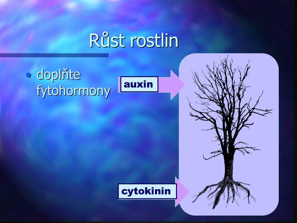 Růst rostlin doplňte fytohormonydoplňte fytohormony auxin cytokinin