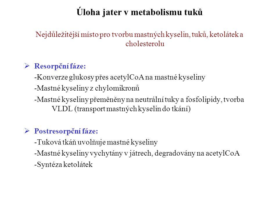 Úloha jater v metabolismu tuků Nejdůležitější místo pro tvorbu mastných kyselin, tuků, ketolátek a cholesterolu  Resorpční fáze: -Konverze glukosy přes acetylCoA na mastné kyseliny -Mastné kyseliny z chylomikronů -Mastné kyseliny přeměněny na neutrální tuky a fosfolipidy, tvorba VLDL (transport mastných kyselin do tkání)  Postresorpční fáze: -Tuková tkáň uvolňuje mastné kyseliny -Mastné kyseliny vychytány v játrech, degradovány na acetylCoA -Syntéza ketolátek