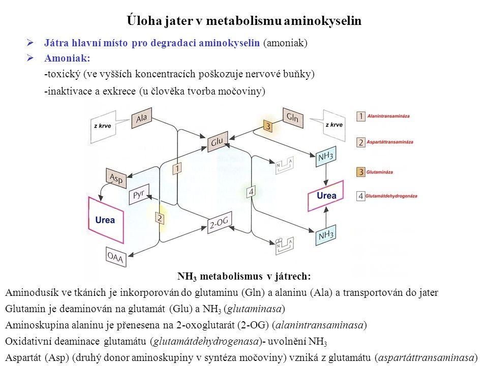 Úloha jater v metabolismu aminokyselin  Játra hlavní místo pro degradaci aminokyselin (amoniak)  Amoniak: -toxický (ve vyšších koncentracích poškozuje nervové buňky) -inaktivace a exkrece (u člověka tvorba močoviny) NH 3 metabolismus v játrech: Aminodusík ve tkáních je inkorporován do glutaminu (Gln) a alaninu (Ala) a transportován do jater Glutamin je deaminován na glutamát (Glu) a NH 3 (glutaminasa) Aminoskupina alaninu je přenesena na 2-oxoglutarát (2-OG) (alanintransaminasa) Oxidativní deaminace glutamátu (glutamátdehydrogenasa)- uvolnění NH 3 Aspartát (Asp) (druhý donor aminoskupiny v syntéza močoviny) vzniká z glutamátu (aspartáttransaminasa)
