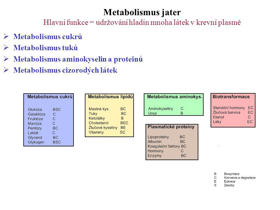 Metabolismus jater Hlavní funkce = udržování hladin mnoha látek v krevní plasmě  Metabolismus cukrů  Metabolismus tuků  Metabolismus aminokyselin a proteinů  Metabolismus cizorodých látek