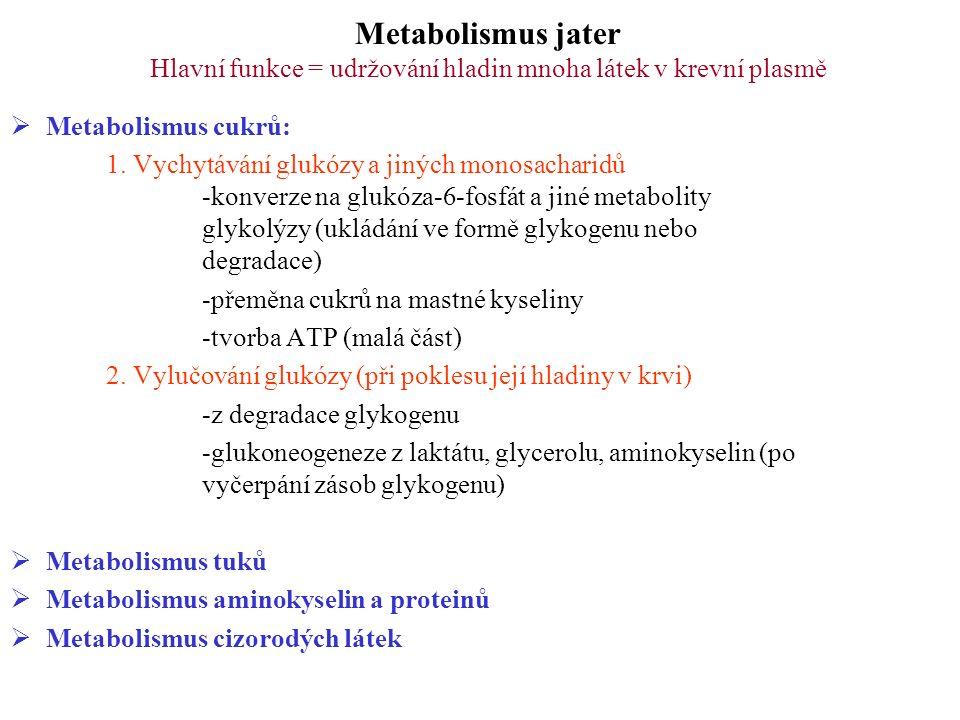 Metabolismus jater Hlavní funkce = udržování hladin mnoha látek v krevní plasmě  Metabolismus cukrů  Metabolismus tuků: 1.