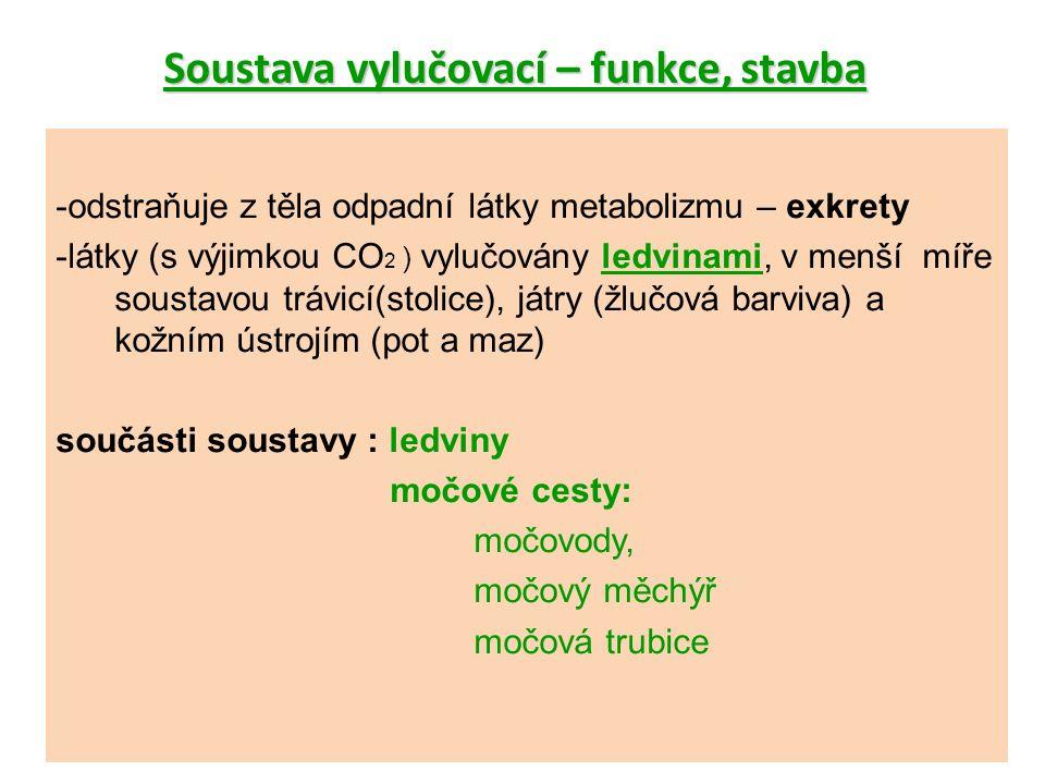 Soustava vylučovací – funkce, stavba -odstraňuje z těla odpadní látky metabolizmu – exkrety -látky (s výjimkou CO 2 ) vylučovány ledvinami, v menší míře soustavou trávicí(stolice), játry (žlučová barviva) a kožním ústrojím (pot a maz) součásti soustavy : ledviny močové cesty: močovody, močový měchýř močová trubice