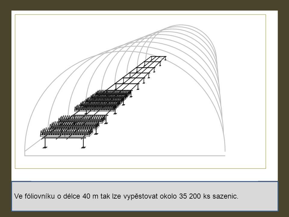 Ve fóliovníku o délce 40 m tak lze vypěstovat okolo 35 200 ks sazenic.