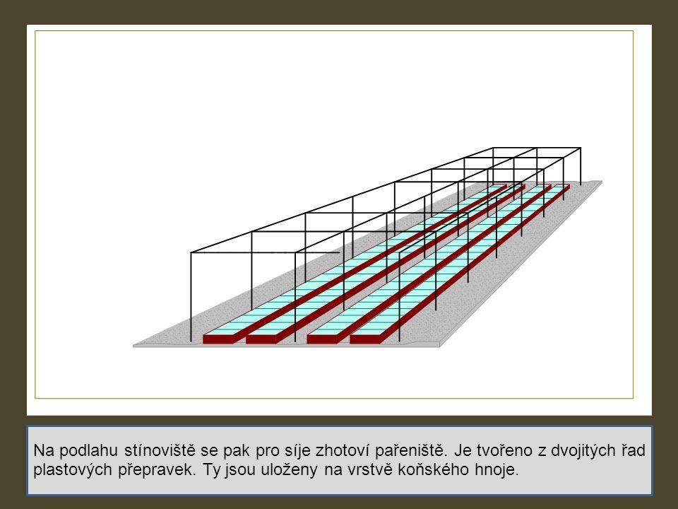 Na podlahu stínoviště se pak pro síje zhotoví pařeniště. Je tvořeno z dvojitých řad plastových přepravek. Ty jsou uloženy na vrstvě koňského hnoje.