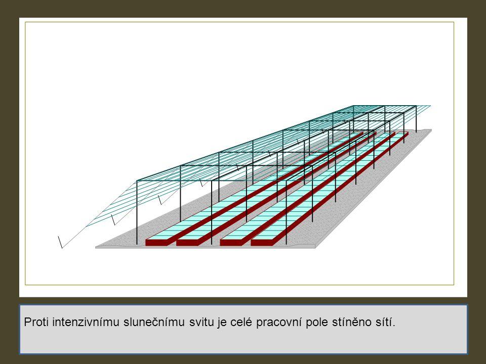 Proti intenzivnímu slunečnímu svitu je celé pracovní pole stíněno sítí.