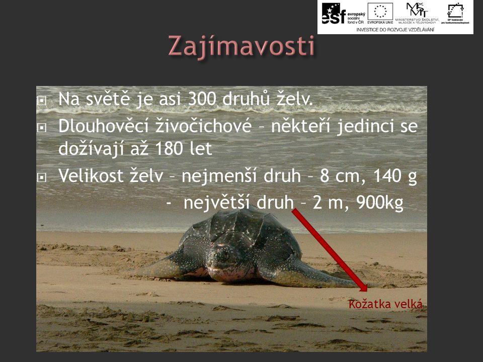  Na světě je asi 300 druhů želv.