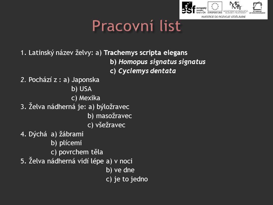 1. Latinský název želvy: a) Trachemys scripta elegans b) Homopus signatus signatus c) Cyclemys dentata 2. Pochází z : a) Japonska b) USA c) Mexika 3.