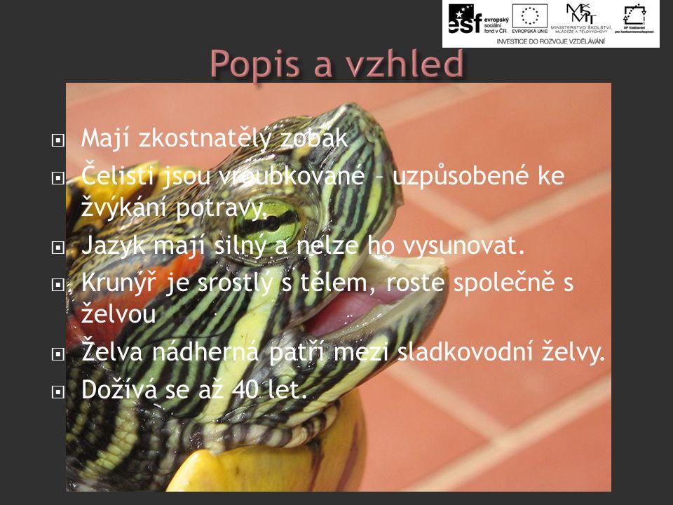  Mají zkostnatělý zobák  Čelisti jsou vroubkované – uzpůsobené ke žvýkání potravy.